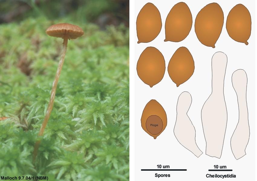 Essay on fungi